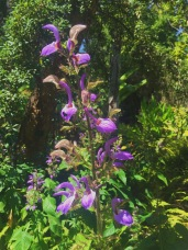 Flowers at the botanical garden. Location: Westwood, California