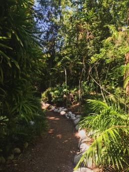 Walking path at the botanical garden. Location: Westwood, California